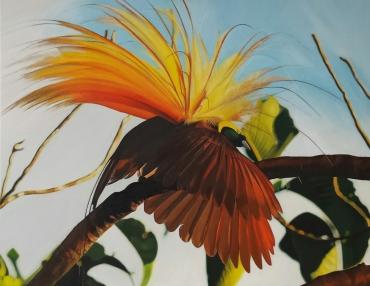 Schilderij Paradijsvogel