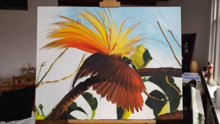 Paradijsvogel